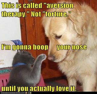 Funny-pictures-this-is-called-aversion-therapy-not-torture-im-gonna-boop-your-nose-until-you-actually-love-it