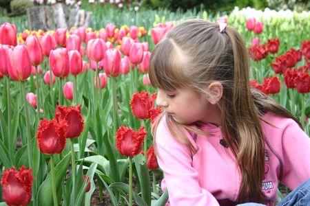 April 12 07 tulips 017