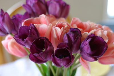 April_8_07_easter_012
