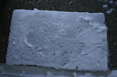 November_27_06_snow_002